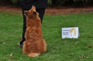 Rally Obedience 1